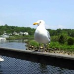 Bills-Seafood-Restaurant-Westbrook-CT-Seagull-On-Deck